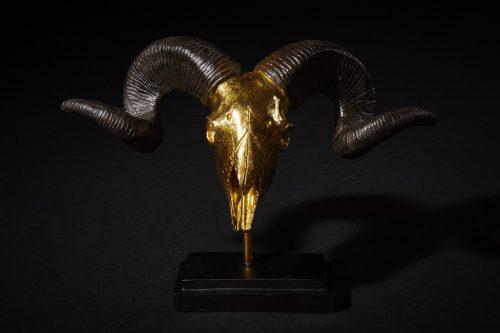 Widder Gold 2