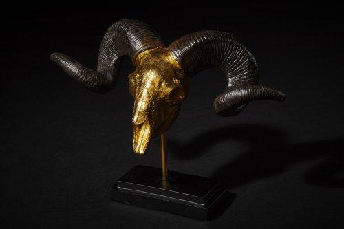 Widder Gold 1