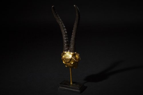 Steinbock Gold 3